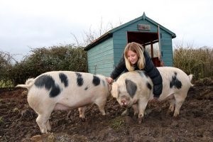 Millie with her Pigs