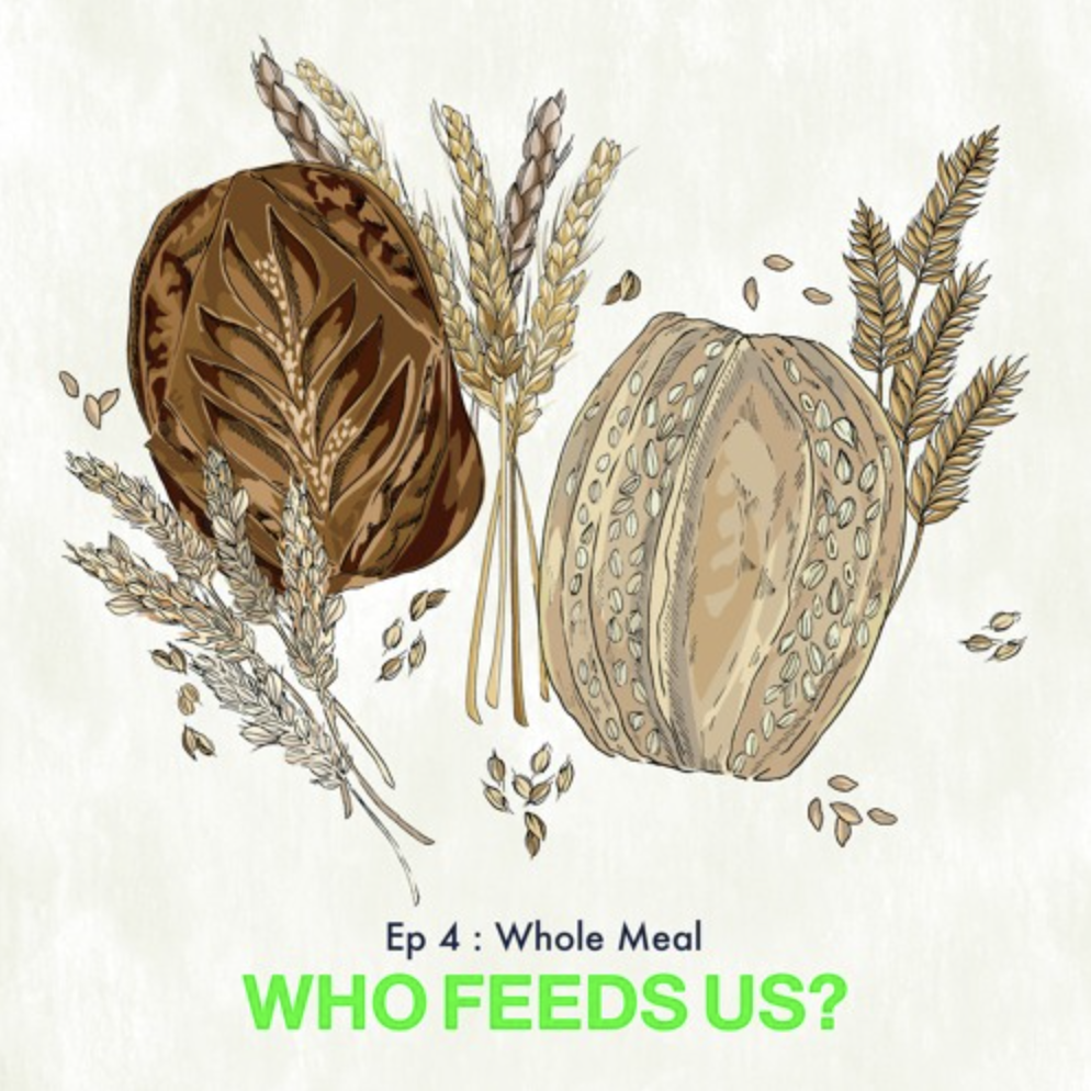 Imagee of bread and grains | Who Feeds us? | Whole meal episode