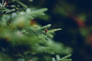 Sustainable Christmas trees